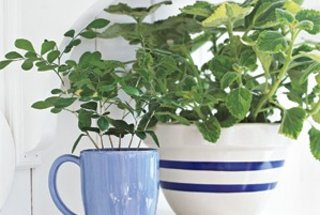 repot-plant-as-hostess-gift
