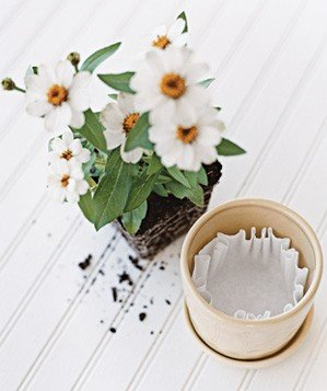 coffee-filter-used-in-flower-pot