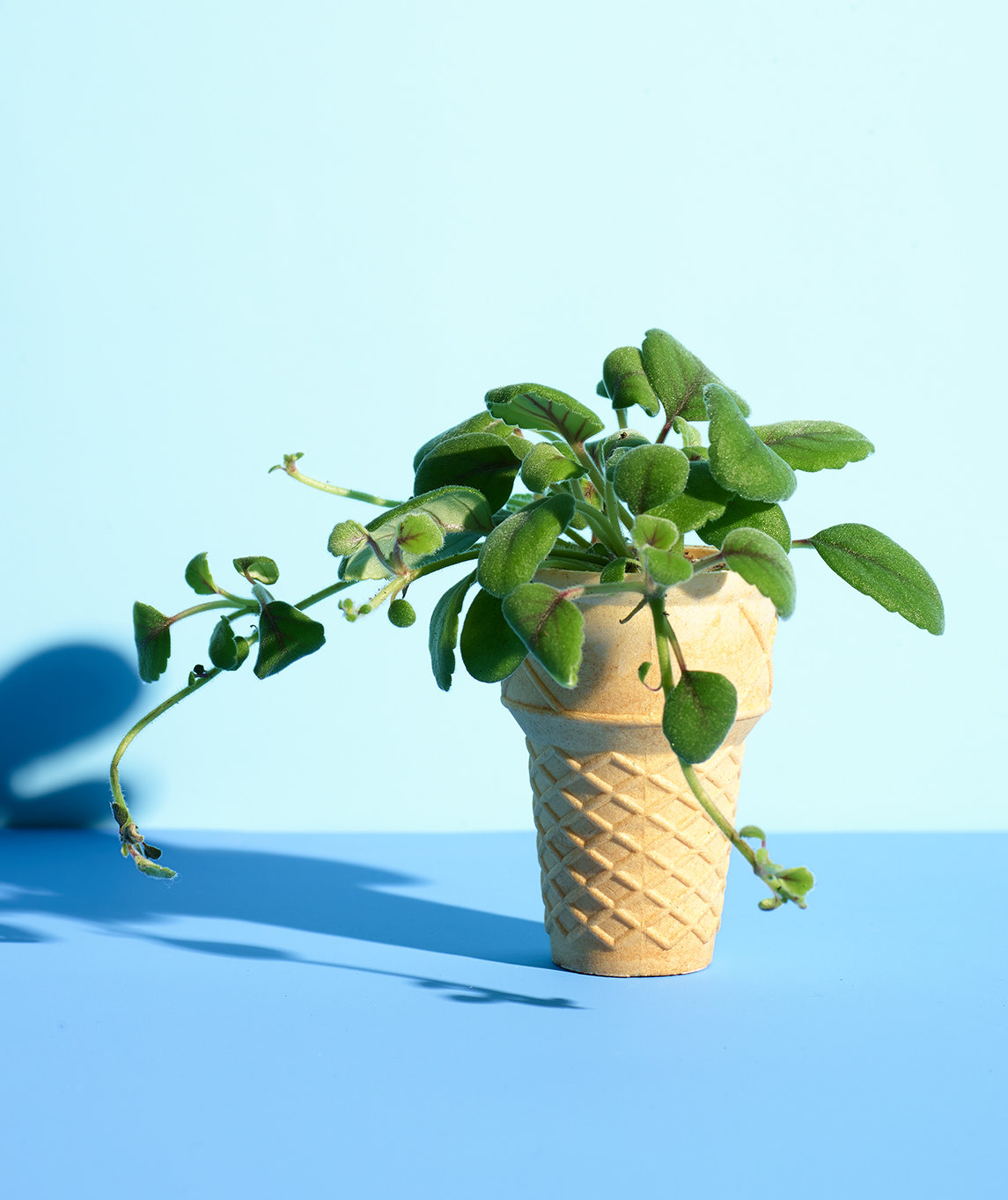 ice-cream-cone-seed-starter