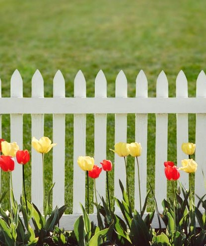 tulips-white-picket-fence